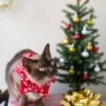 eatsleepwear, christmas, holidays, home, decor