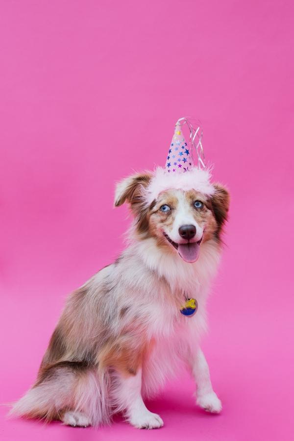 eatsleepwear-lola-miniaussie-dog-dogbirthday-dogparty-fiesta-kimberlylapides-1