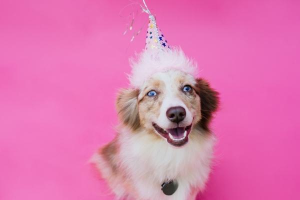 eatsleepwear-lola-miniaussie-dog-dogbirthday-dogparty-fiesta-kimberlylapides-10