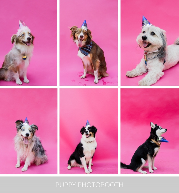eatsleepwear-lola-miniaussie-dog-dogbirthday-dogparty-fiesta-kimberlylapides-15