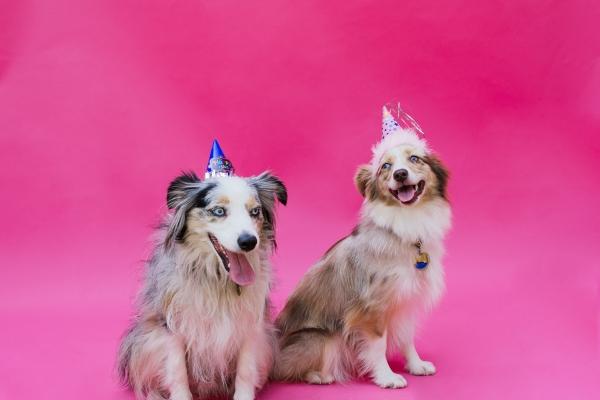 eatsleepwear-lola-miniaussie-dog-dogbirthday-dogparty-fiesta-kimberlylapides-19