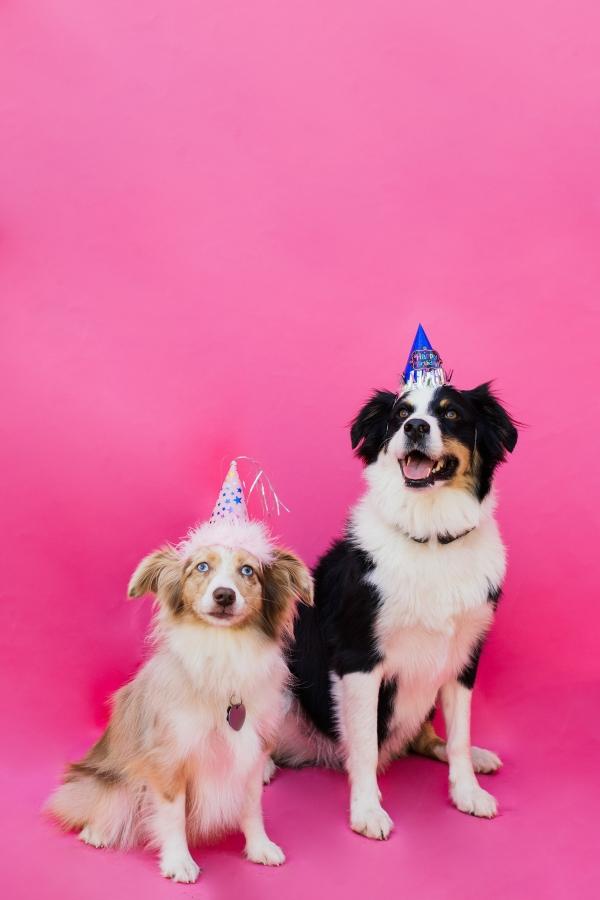 eatsleepwear-lola-miniaussie-dog-dogbirthday-dogparty-fiesta-kimberlylapides-20