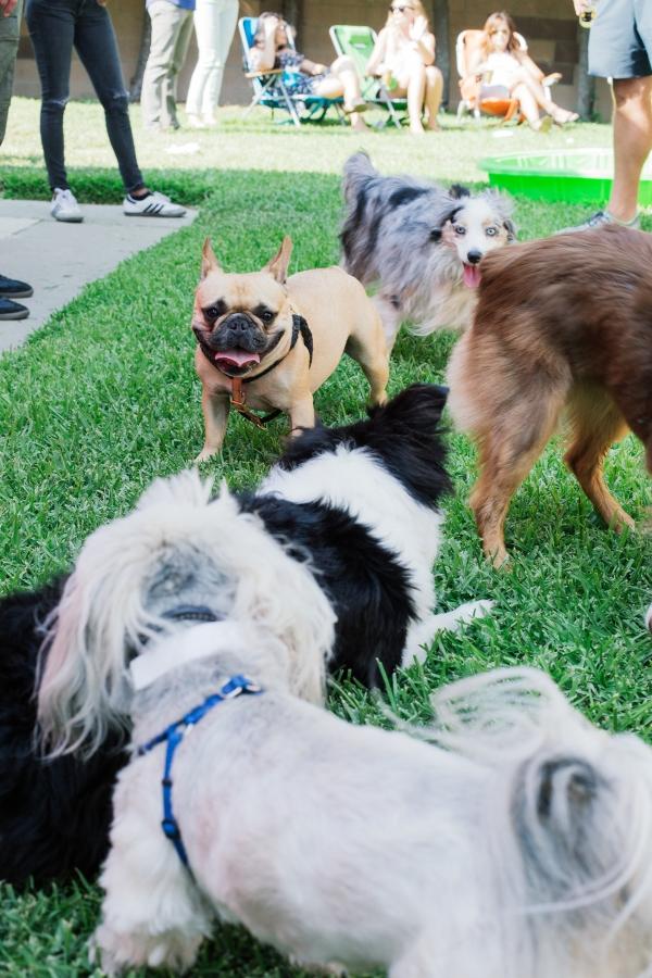eatsleepwear-lola-miniaussie-dog-dogbirthday-dogparty-fiesta-kimberlylapides-21