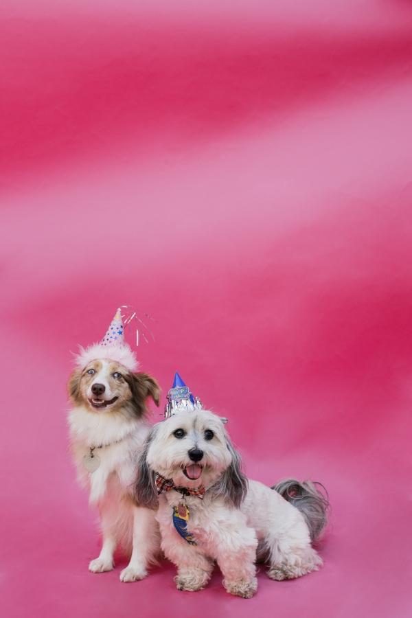 eatsleepwear-lola-miniaussie-dog-dogbirthday-dogparty-fiesta-kimberlylapides-22