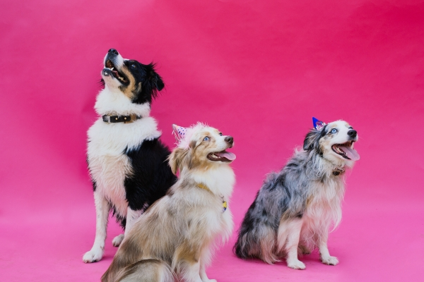 eatsleepwear-lola-miniaussie-dog-dogbirthday-dogparty-fiesta-kimberlylapides-4