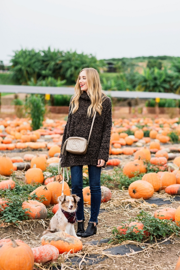 eatsleepwear, outfit, halloween, pumpkin patch, free people, kimberly lapides, jbrand, pumpkins, sigerson morrison, gucci