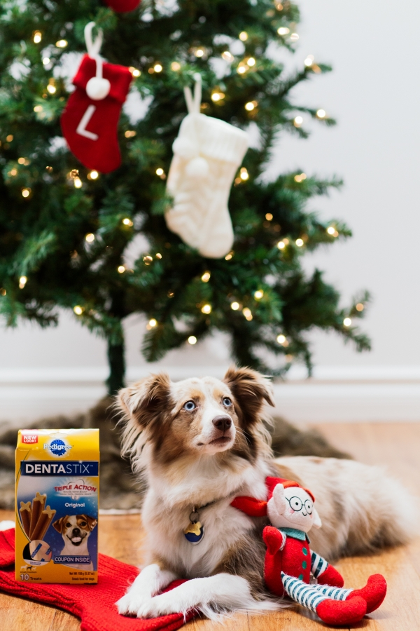 eatsleepwear, kimberly lapides, pedigree, dentastix, holidays, dog