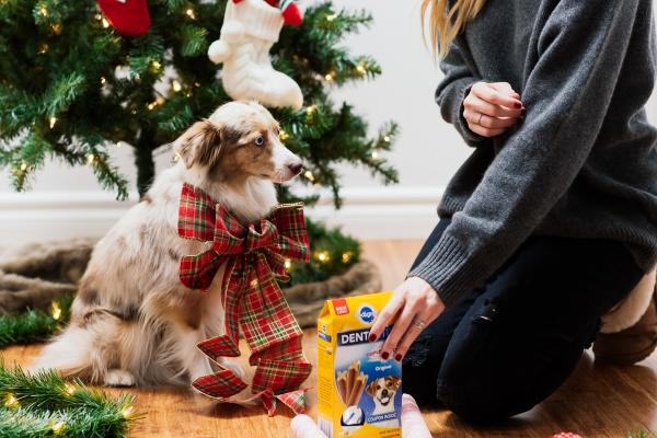 eatsleepwear, LOLA, Kimberly Lapides, Pedigree, Dentastix, Holidays, Dog