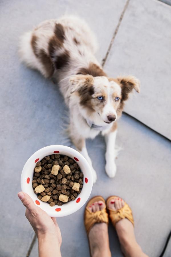 eatsleepwear, Kimberly Lapides, LOLA, Stella And Chewys, Dog Food