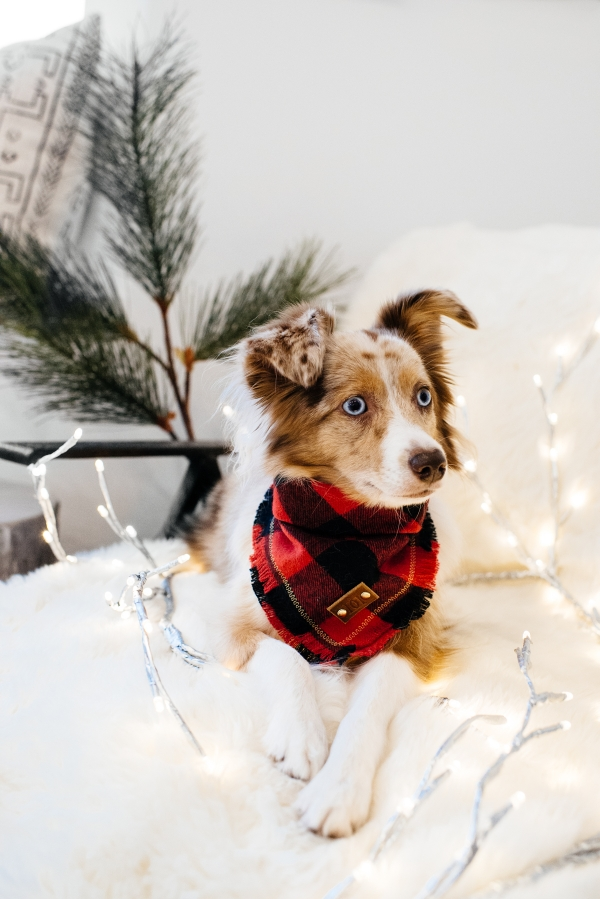 eatsleepwear, Kimberly Lapides, LolaTheMiniAussie, MiniAussie, Holiday, Gift Guide, Pets, dog