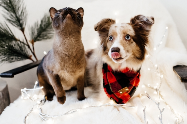 eatsleepwear, Kimberly Lapides, LolaTheMiniAussie, MiniAussie, Holiday, Gift Guide, Pets, dog, cat