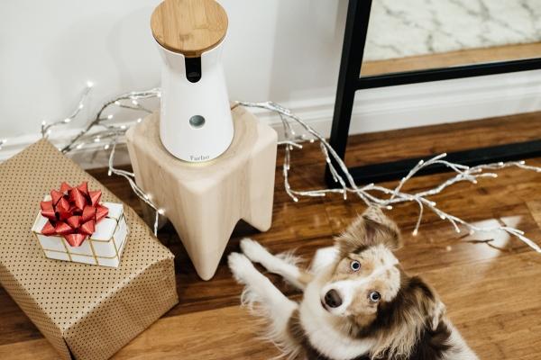 eatsleepwear, Kimberly Lapides, Lola, Furbo, Holidays, Gift, Pets