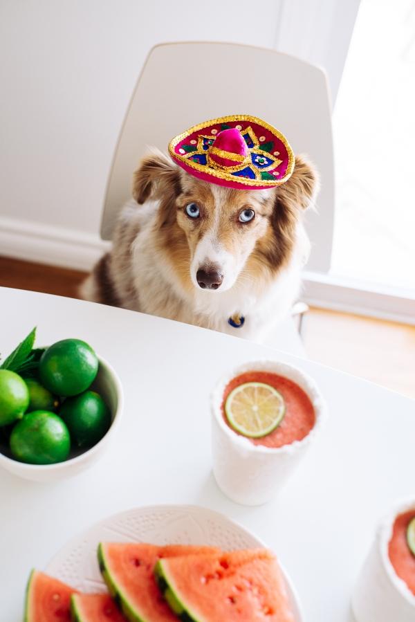 eatsleepwear, Kimberly Lapides, FOOD, Cocktail, Recipe, Watermelon Margarita, Mocktail