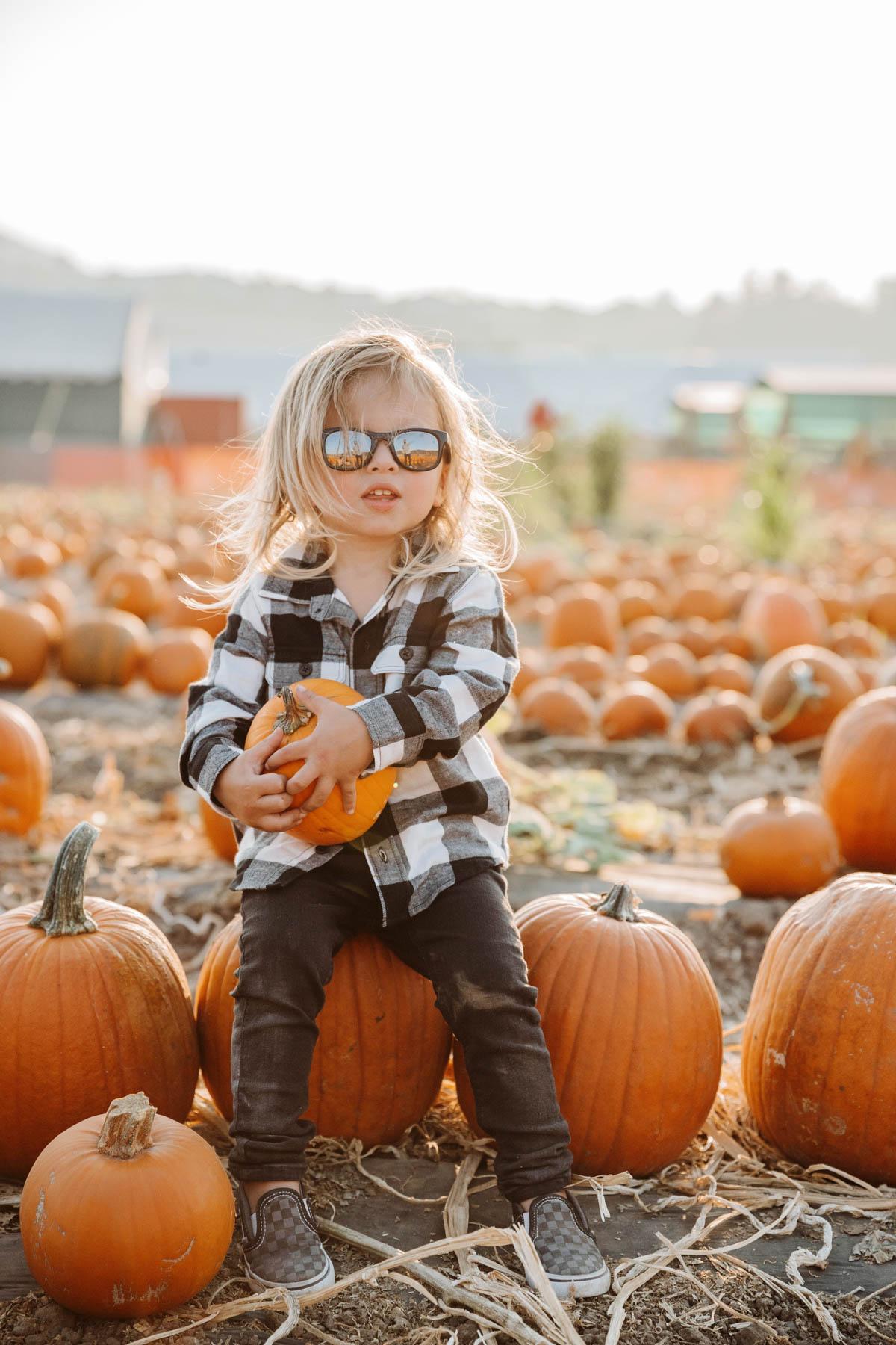 Pumpkin Patch Photo Shoot with Otis
