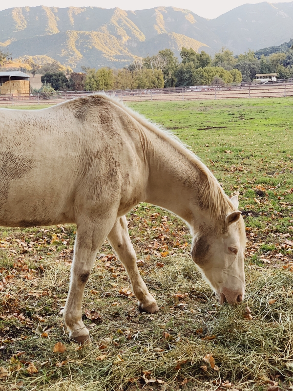 Horses at Alisal Guest Ranch and Resort