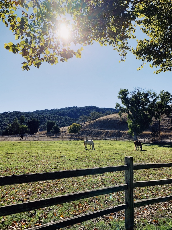 Horse  at Alisal Guest Ranch and Resort