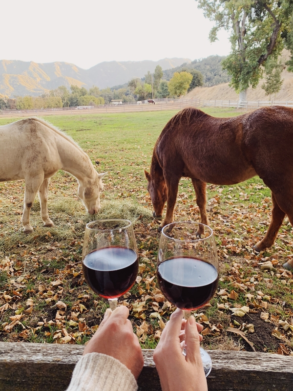 Wine Happy Hour with horses at Alisal Guest Ranch and Resort