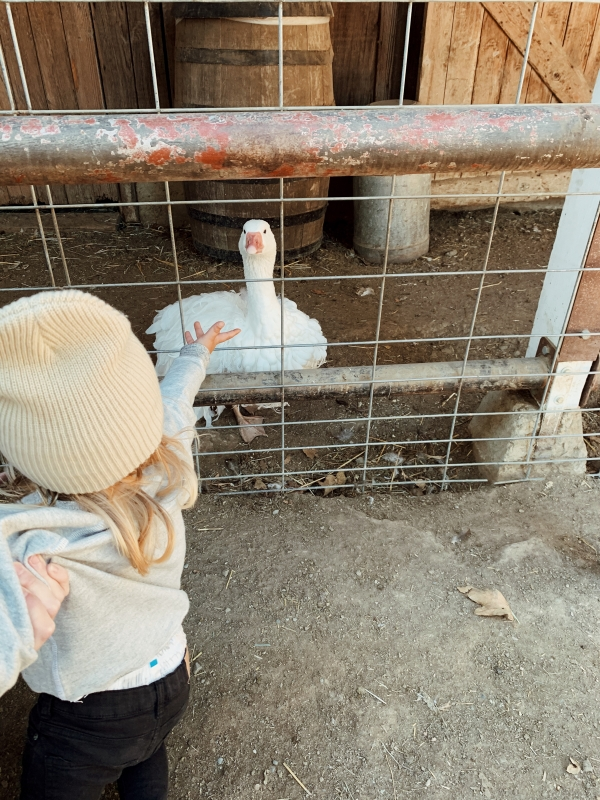 Toddler in kid friendly barnyard at Alisal Guest Ranch and Resort